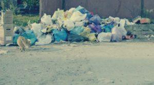 Вывоз мусора в Хотьково