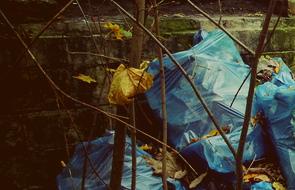 Проблемы вывоза мусора в Софрино