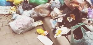 Вывоз мусора в поселении Вялки